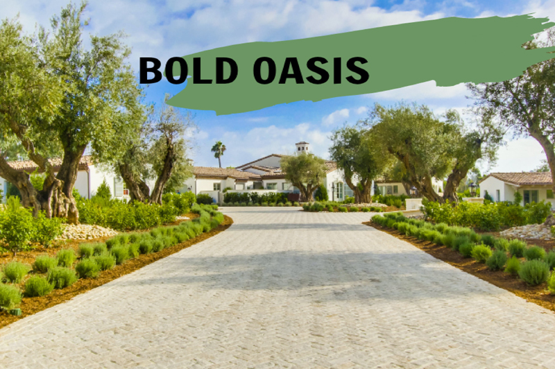 The Bold Oasis: Trend Report
