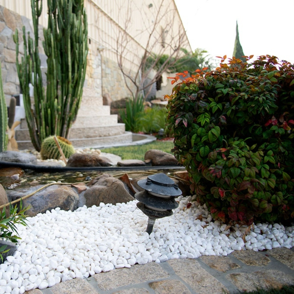 white pebbles garden cover with cacti