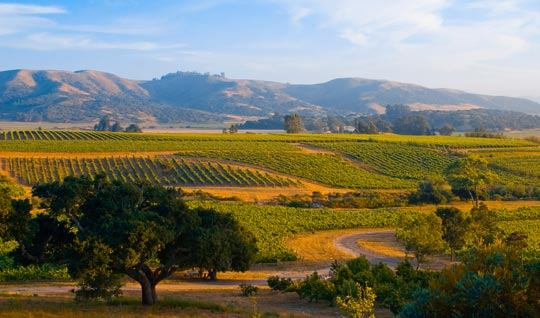 Ceramic Tiles Bring Wine Country Home : Spotl