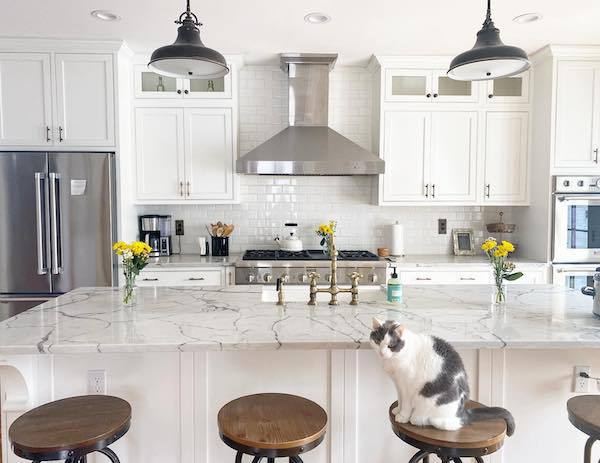 marble veining quartz counter in white kitchen with cat