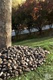 Black Polished Beach Pebbles
